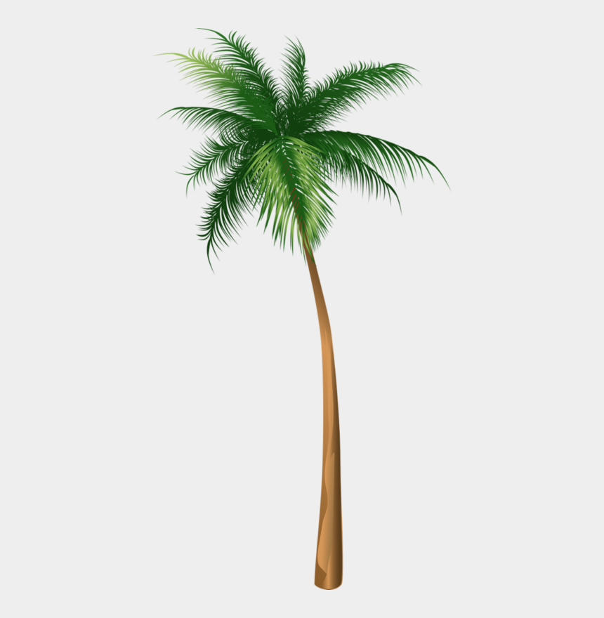 coconut trees clipart, Cartoons - Arecaceae Coconut Tree Illustration Hq Image Free Png - Palm Tree Illustrations Png