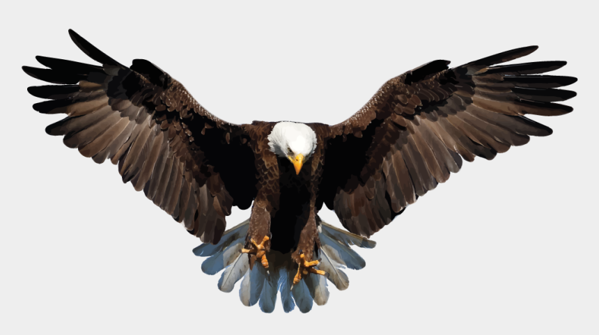 bald eagles clipart, Cartoons - Bald Eagle Clipart Transparent Background - Transparent Background Eagle Png