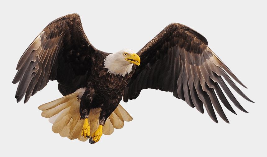 bald eagles clipart, Cartoons - Eagle Clipart Track - Bald Eagle