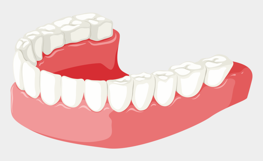 dentures clipart, Cartoons - Lower Jaw - Portable Network Graphics