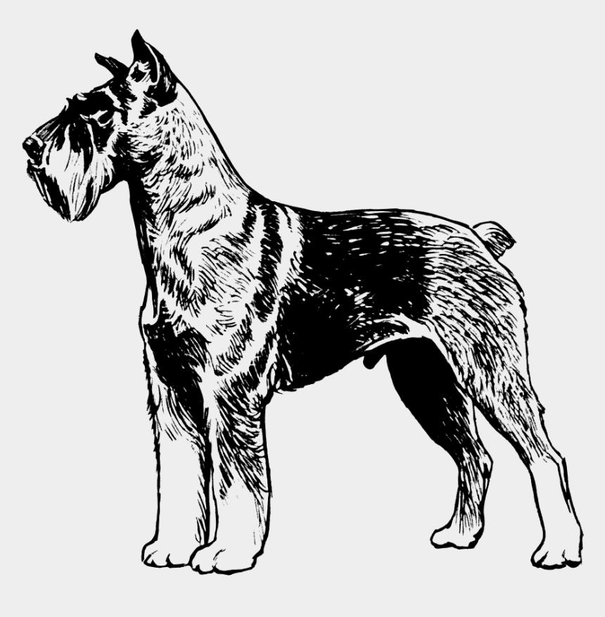 racoon clipart, Cartoons - Clip Art Tags - Great Dane Dog Vector Draw