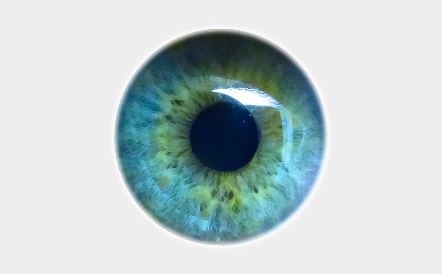 eyes looking up clipart, Cartoons - Iris Eyes Eye Light Pupil Human - Transparent Background Eyeball Png