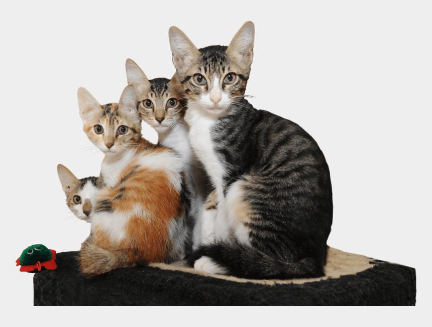 animal shelter clipart, Cartoons - Animal Shelter - Arabian Mau - Domestic Short-haired Cat