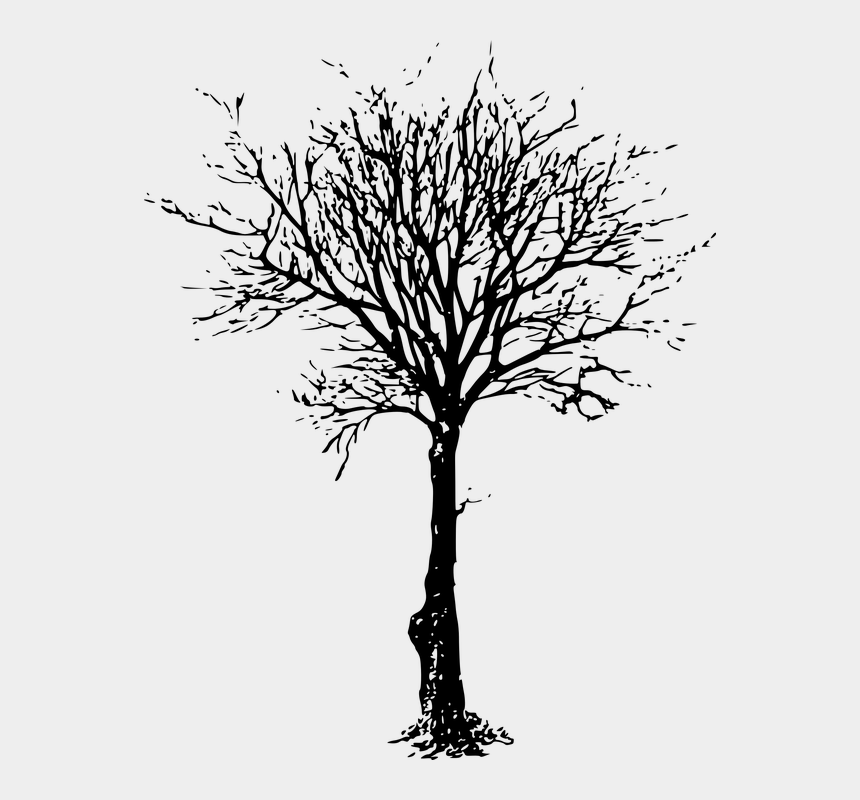 buckeye clipart, Cartoons - Dead Tree Black And White