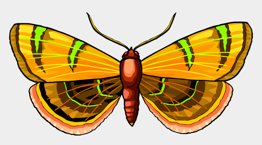 monarch clipart, Cartoons - Monarch Butterfly Moth Pieridae Brush-footed Butterflies - Lepidoptera