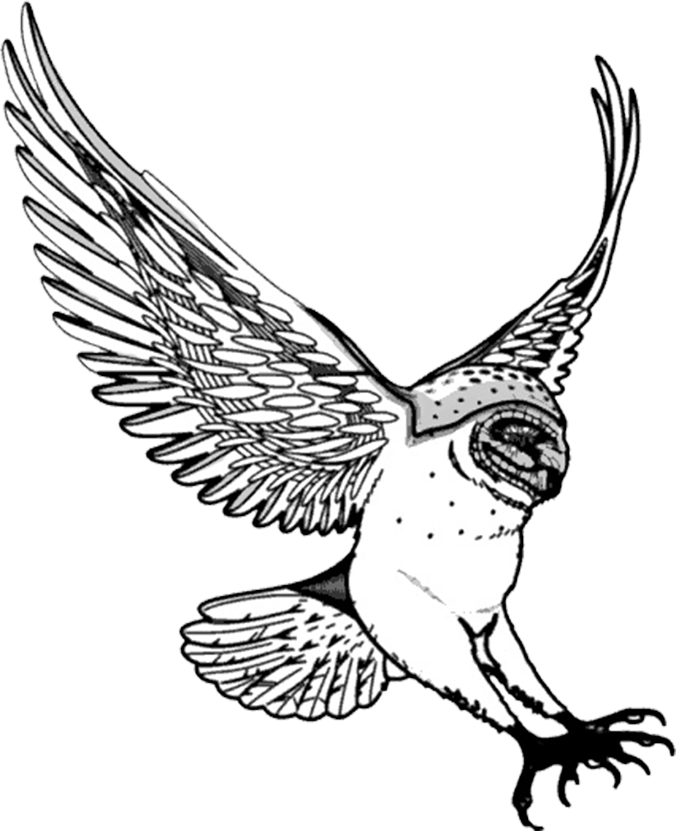 Transparent owl clip art - Drawing Of Barn Owl Swooping - Owl Drawing Png