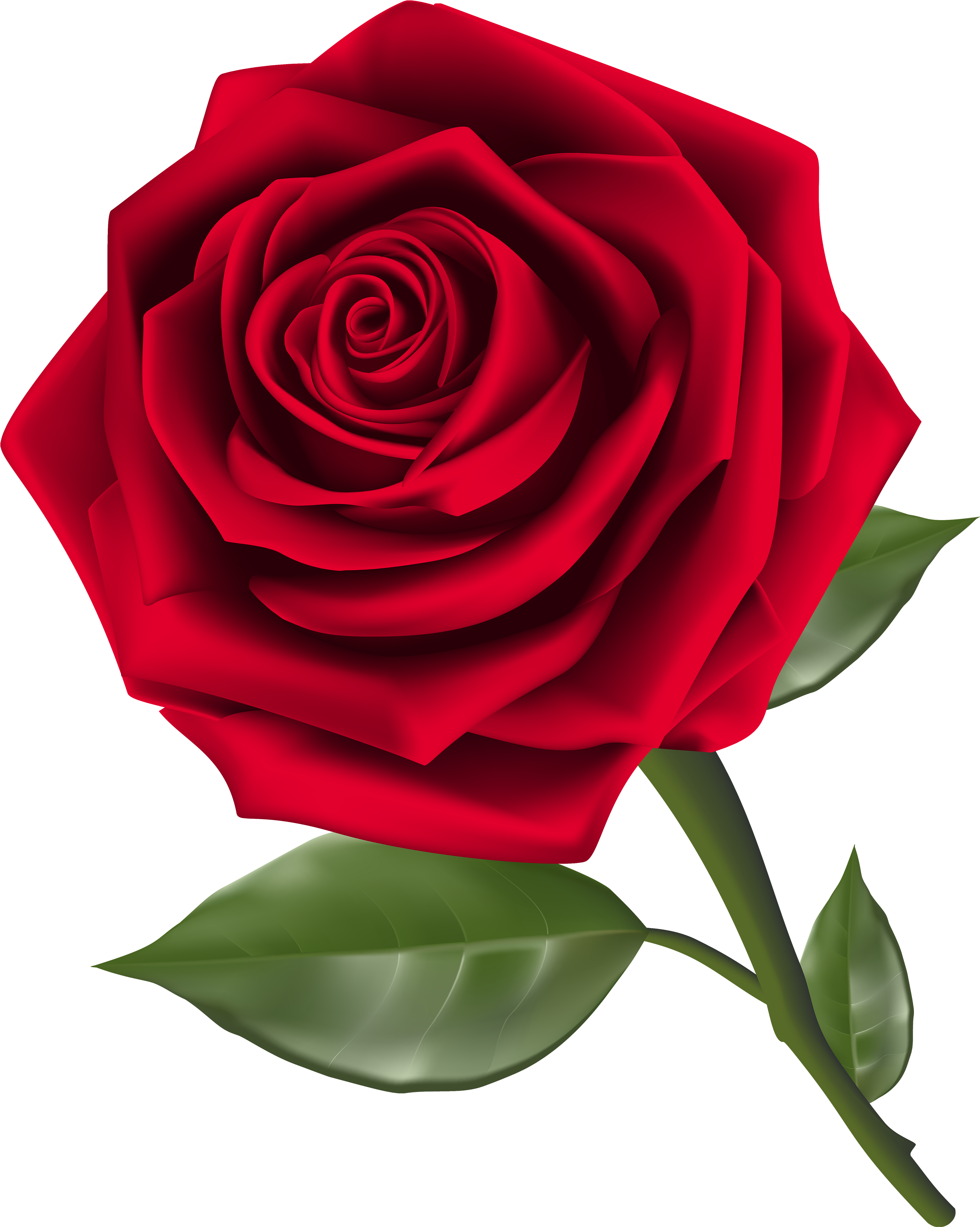 Beautiful Red Rose Png Clipart - Rose Clipart Transparent Background