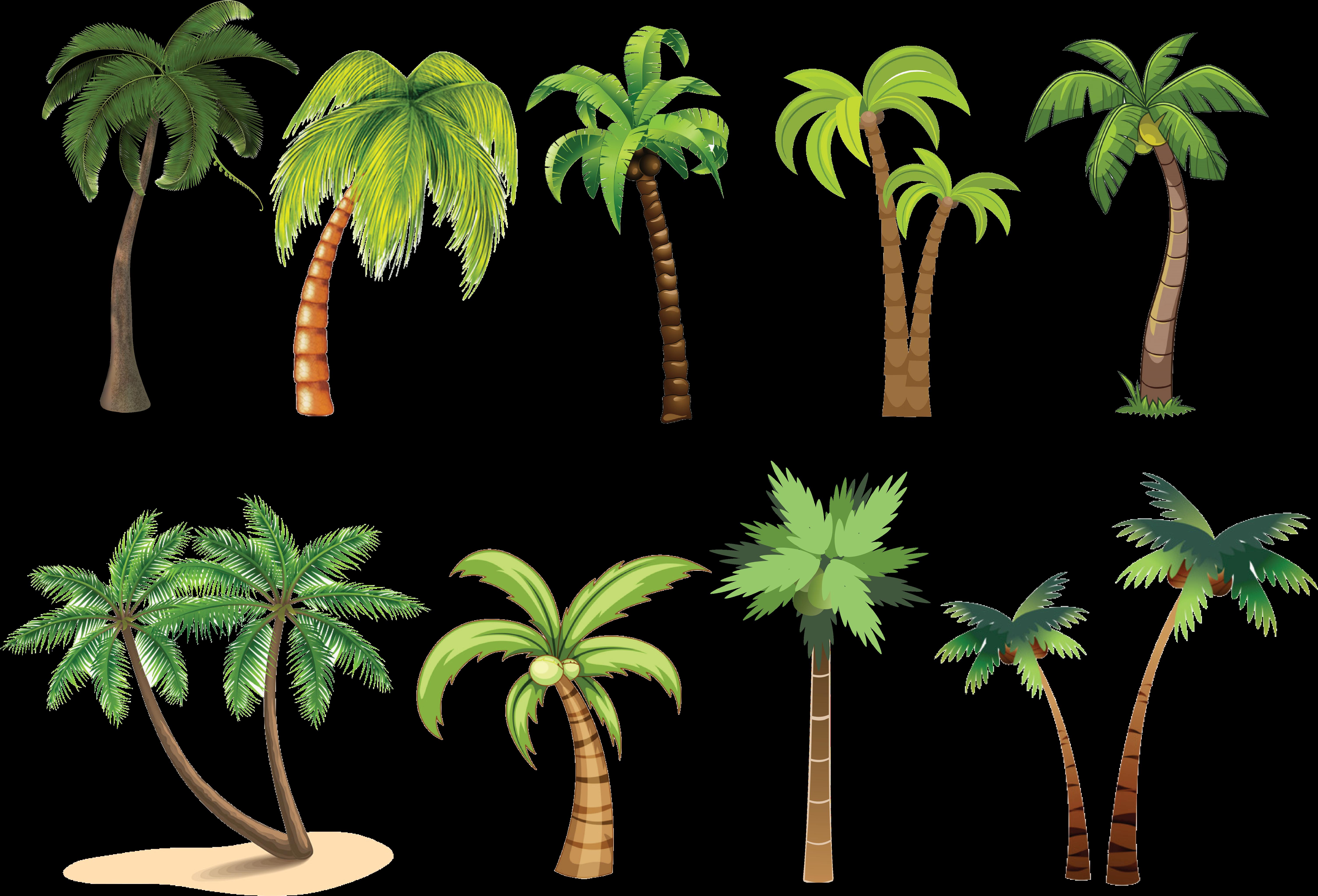 Palm Tree Clip Art , Png Download - Attalea Speciosa , Transparent