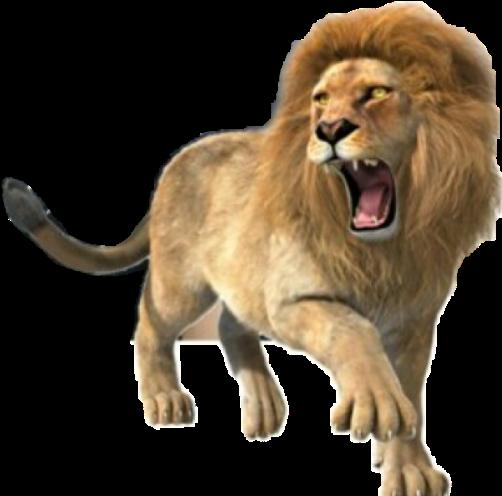 Lion Roar Roaringlion Animals Strength Power Lion Roaring Full Body Transparent Cartoon Jing Fm