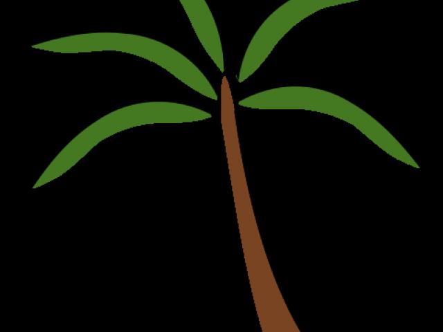 Transparent palm leaf clipart - Palm Tree Clipart Terrestrial Plant - Palm Tree Clip Art