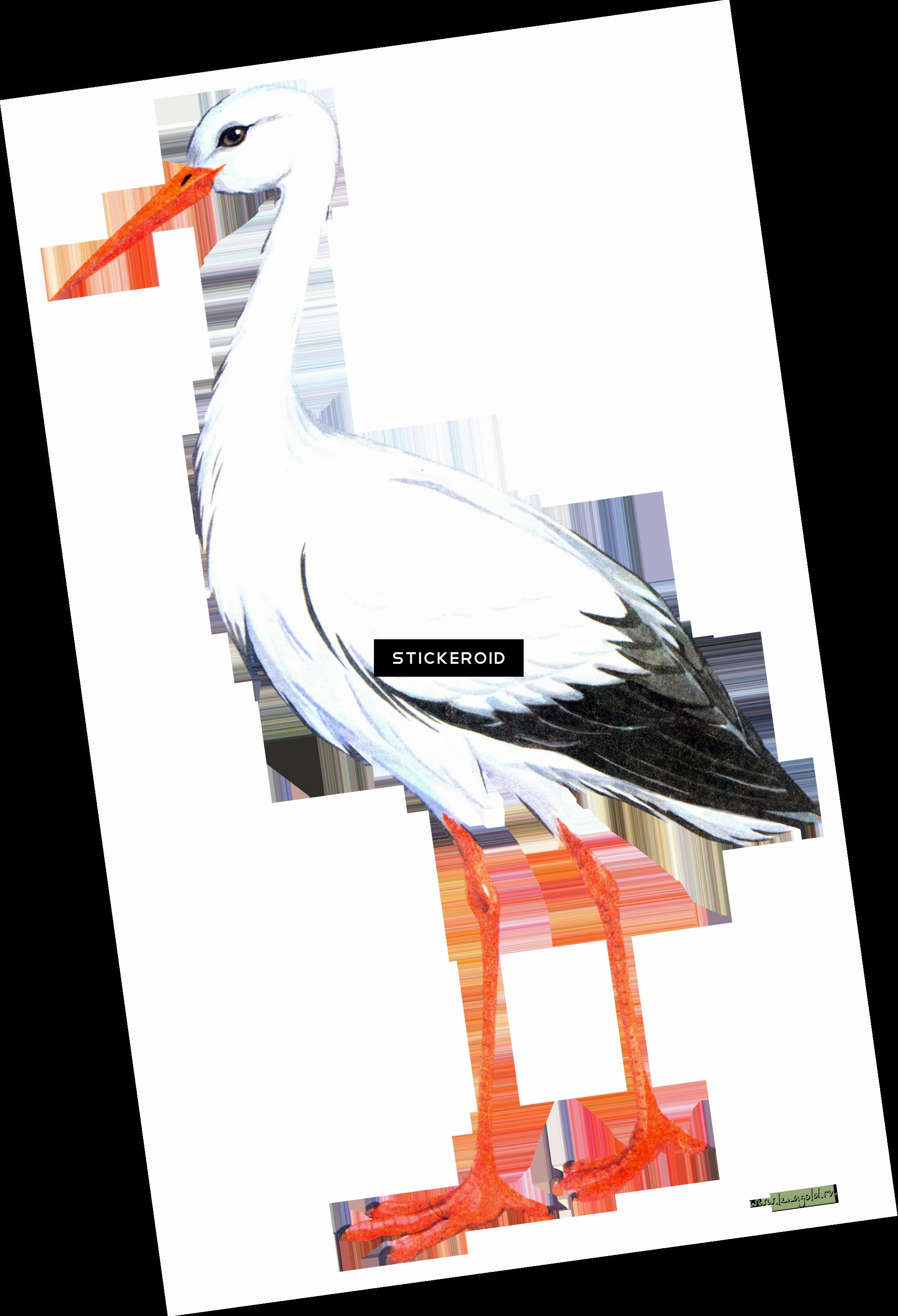 Stork Chalk Cara Gambar Burung Bangau Transparent