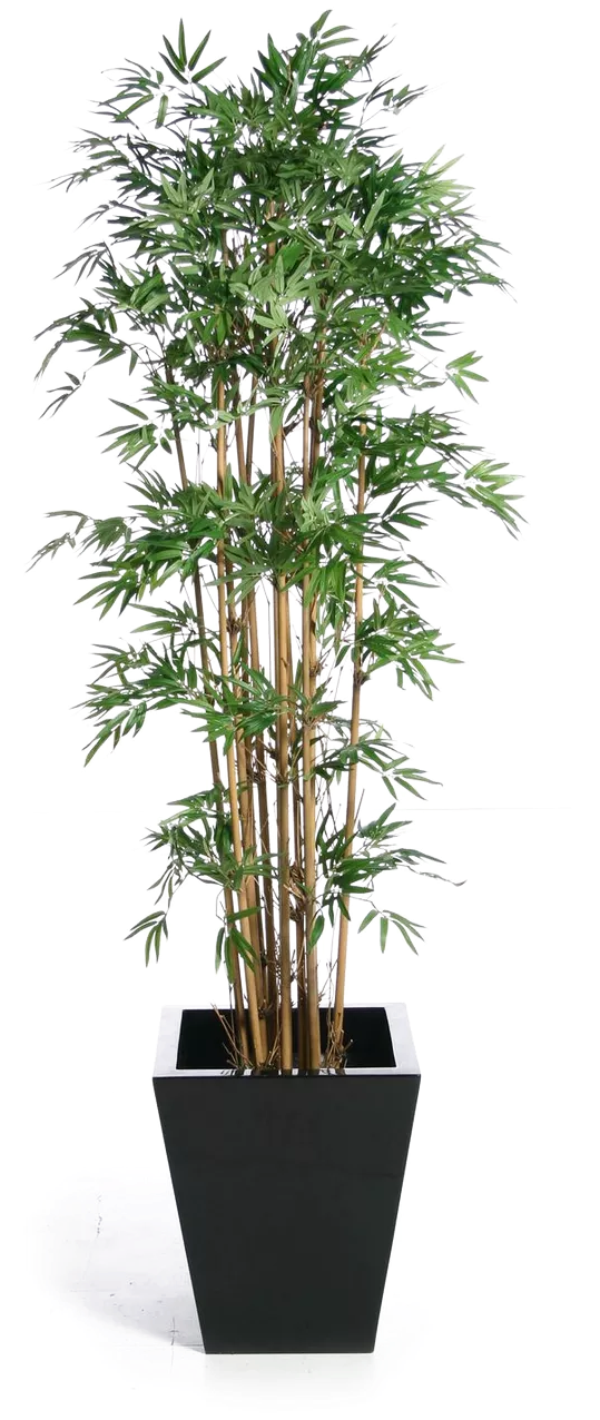 Transparent banyan tree clipart - Banyan Houseplant Buckle Tree Green Fig Weeping Clipart - Tree Plant Chinese Bamboo