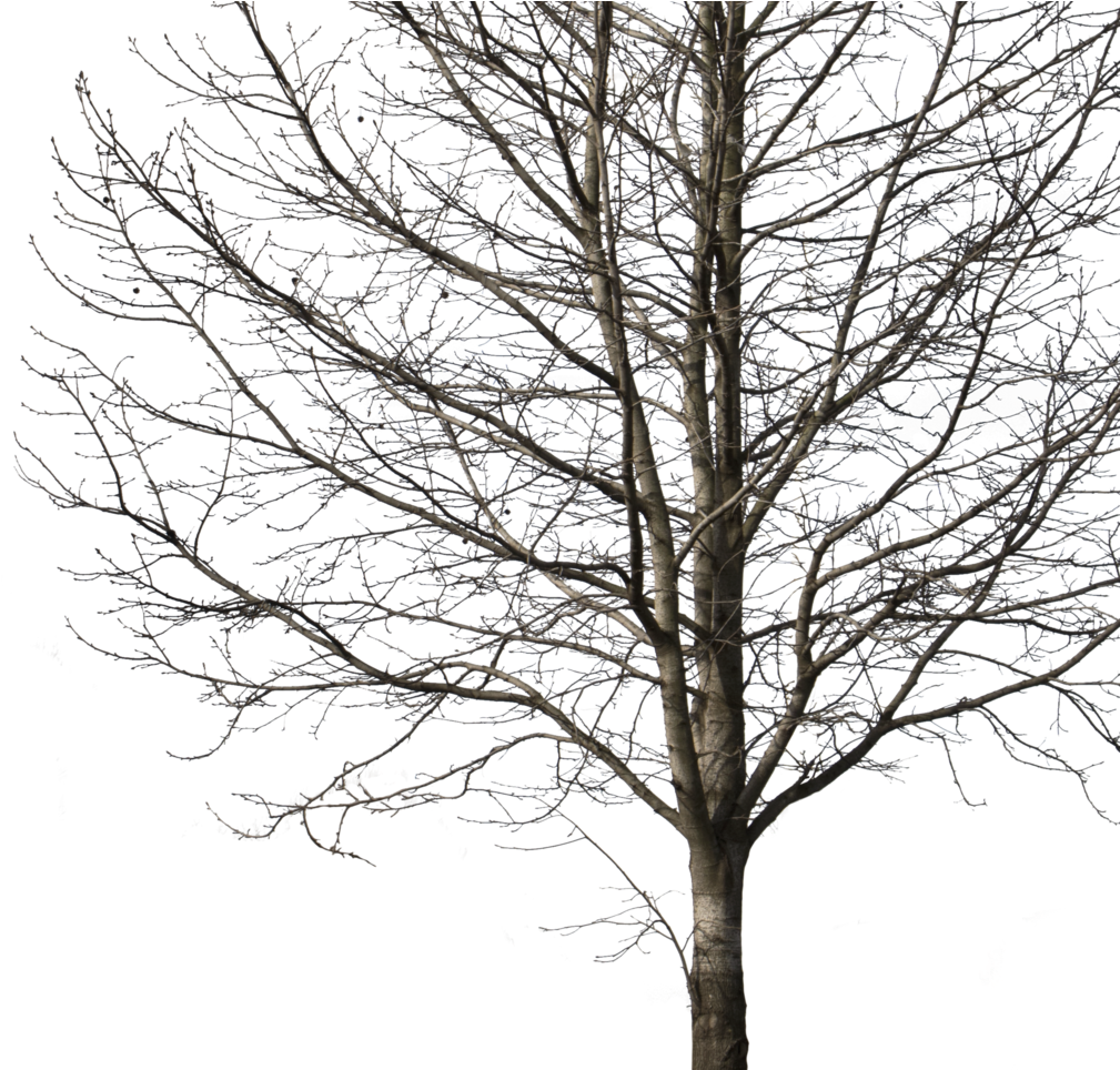 Transparent winter tree clipart - Deciduous Tree Winter I Cutout Trees Png Deciduous - Winter Tree Cut Out Png
