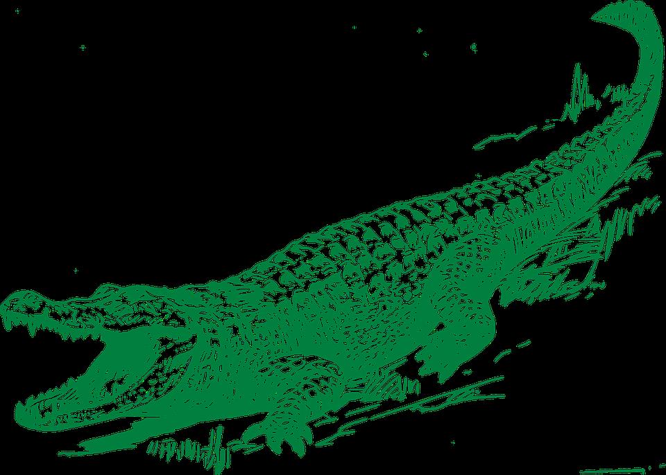 Transparent see you later alligator clipart - Alligator Graphic - Alligator Free