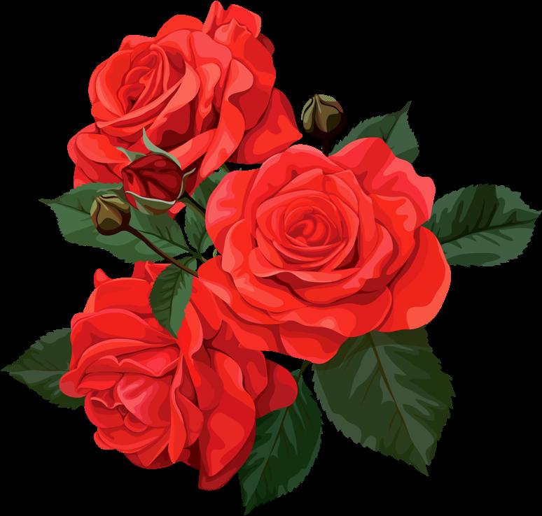 Transparent bridal shower flower clipart - Page Borders Design, Bridal Shower Scrapbook, Flower - Red Rose Bouquet Clipart