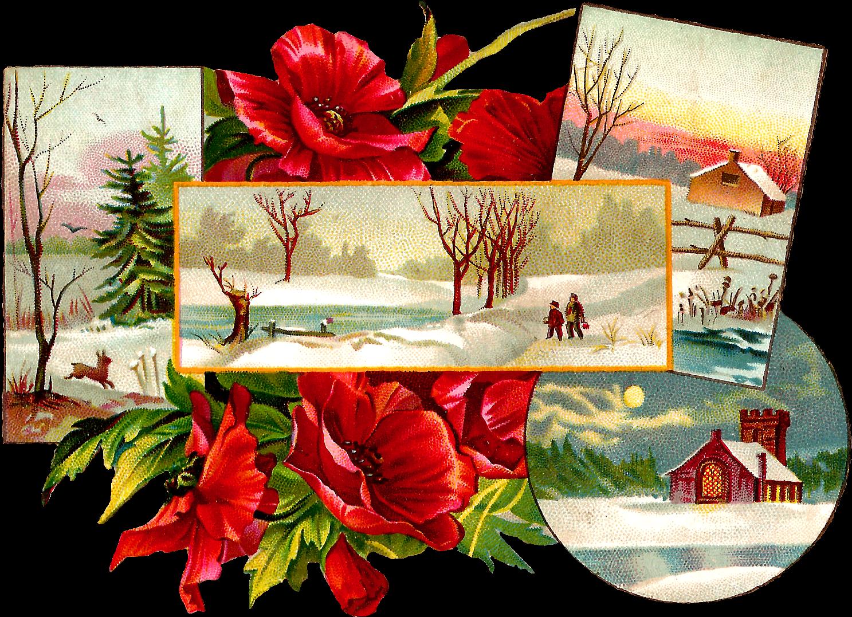 Transparent christmas poinsettias clipart - Stock Christmas Image - Poinsettia