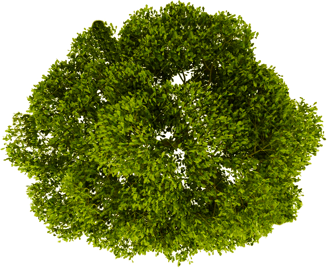 Transparent treetop clipart - Tree Top View Transparent - Trees Top View Png