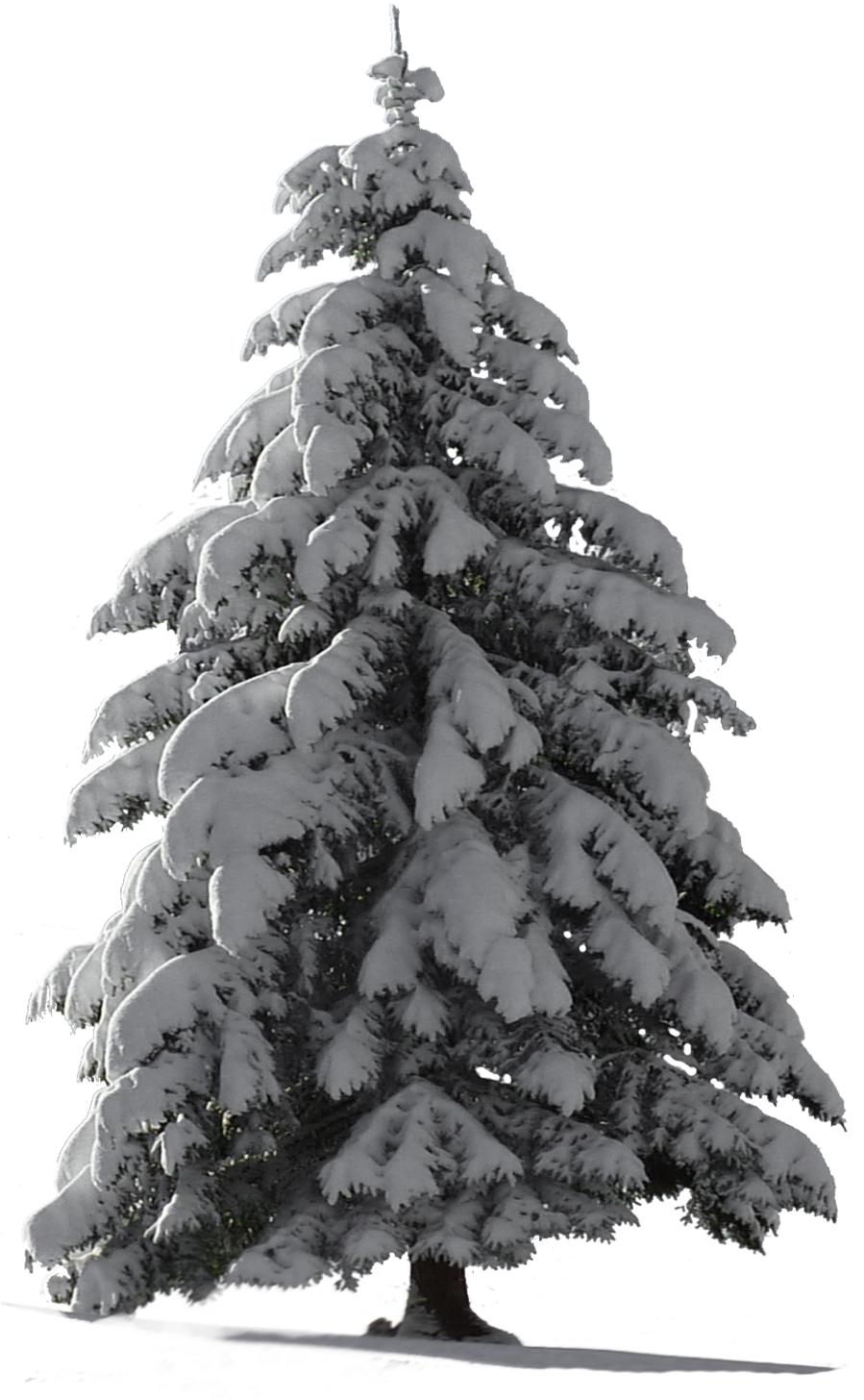 Transparent winter tree clipart black and white - Snow Pine Png - Christmas Tree Snow Png