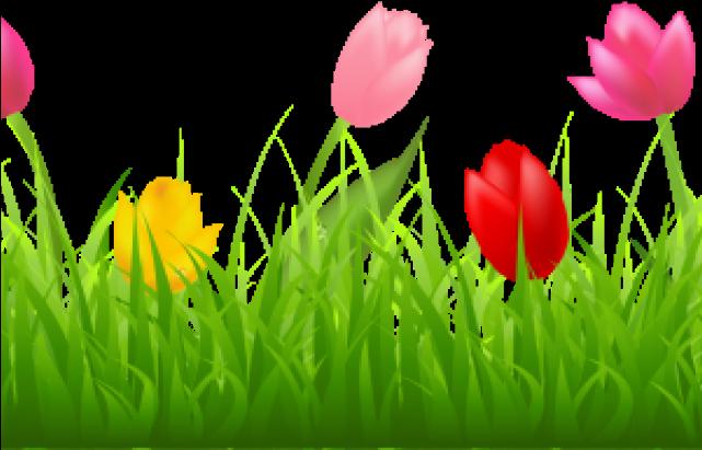 Transparent tulips clipart - Tulip Clipart Transparent Background - Tulip Border Clip Art