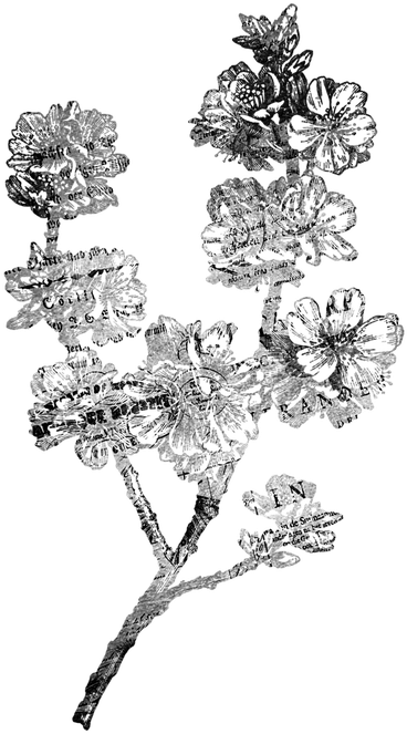 Transparent black and white vintage floral clipart - Flower Antique Scrap - Flower Illustration Black And White Png