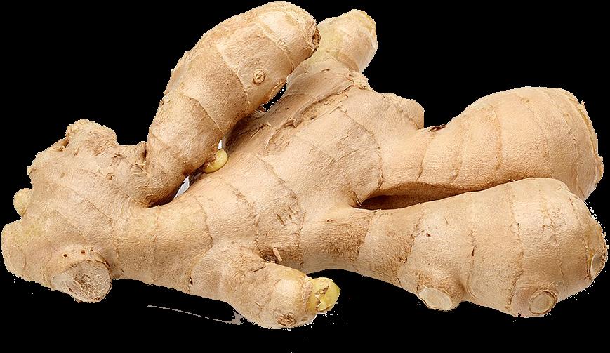 Transparent ginger clipart - Ginger Image Outline