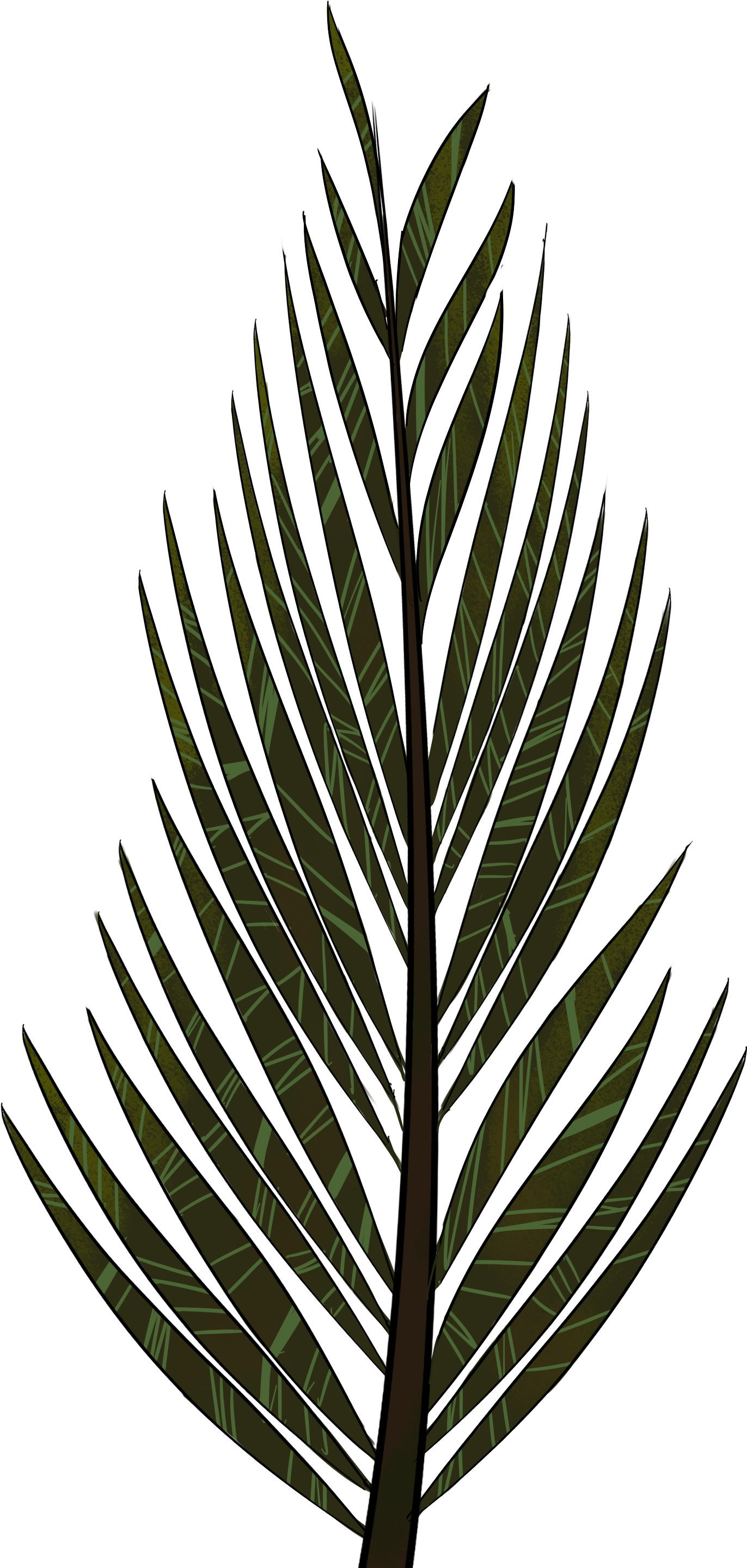 Transparent palm trees clipart - Pine Tree Clip Art Png - Pine Tree Leaves Drawing