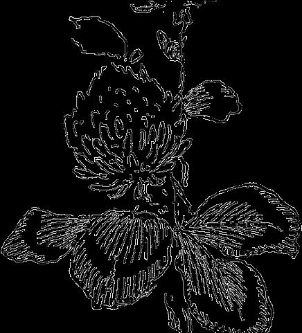 Vintage Flower Clipart Simple Flower Line Art Transparent Cartoon Jing Fm