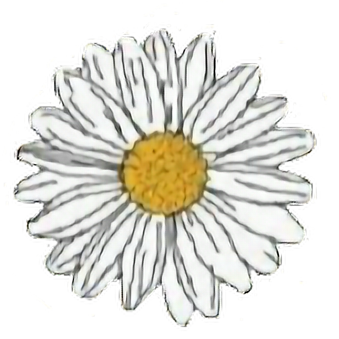 photograph regarding Aesthetic Printable Stickers titled flower #yellow #white #daisy #aesthetic #freetoedit