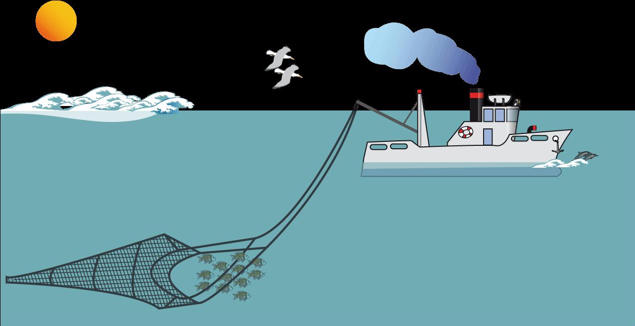 Cartoon Fishing Boat Net Transparent Cartoon Jing Fm