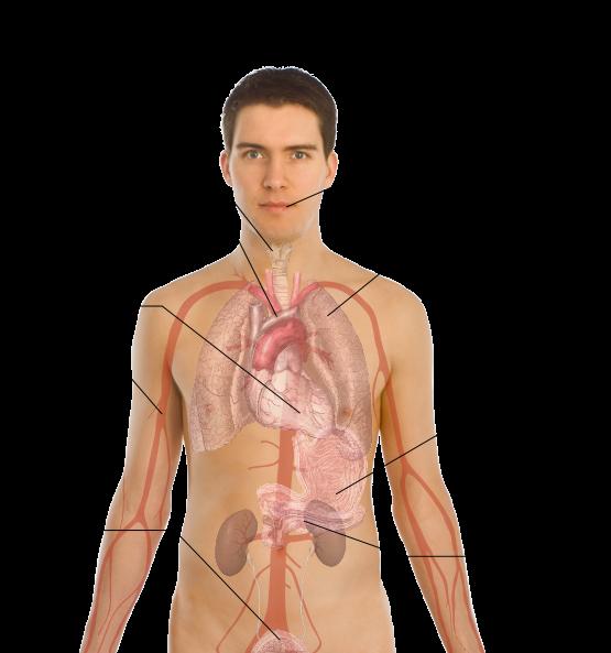 Smoke Effect Clipart Human Body Does Smoking Affect Your Body Transparent Cartoon Jing Fm