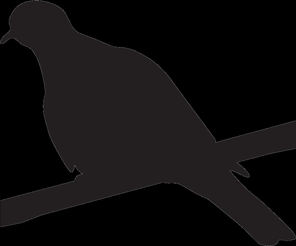 Birds Nest Clipart Doves - Black And White Dove Like Bird