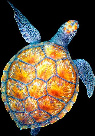 Transparent sea turtle clipart - Clipart Turtle Watercolor, Clipart Turtle Watercolor - Cool Turtle Drawings