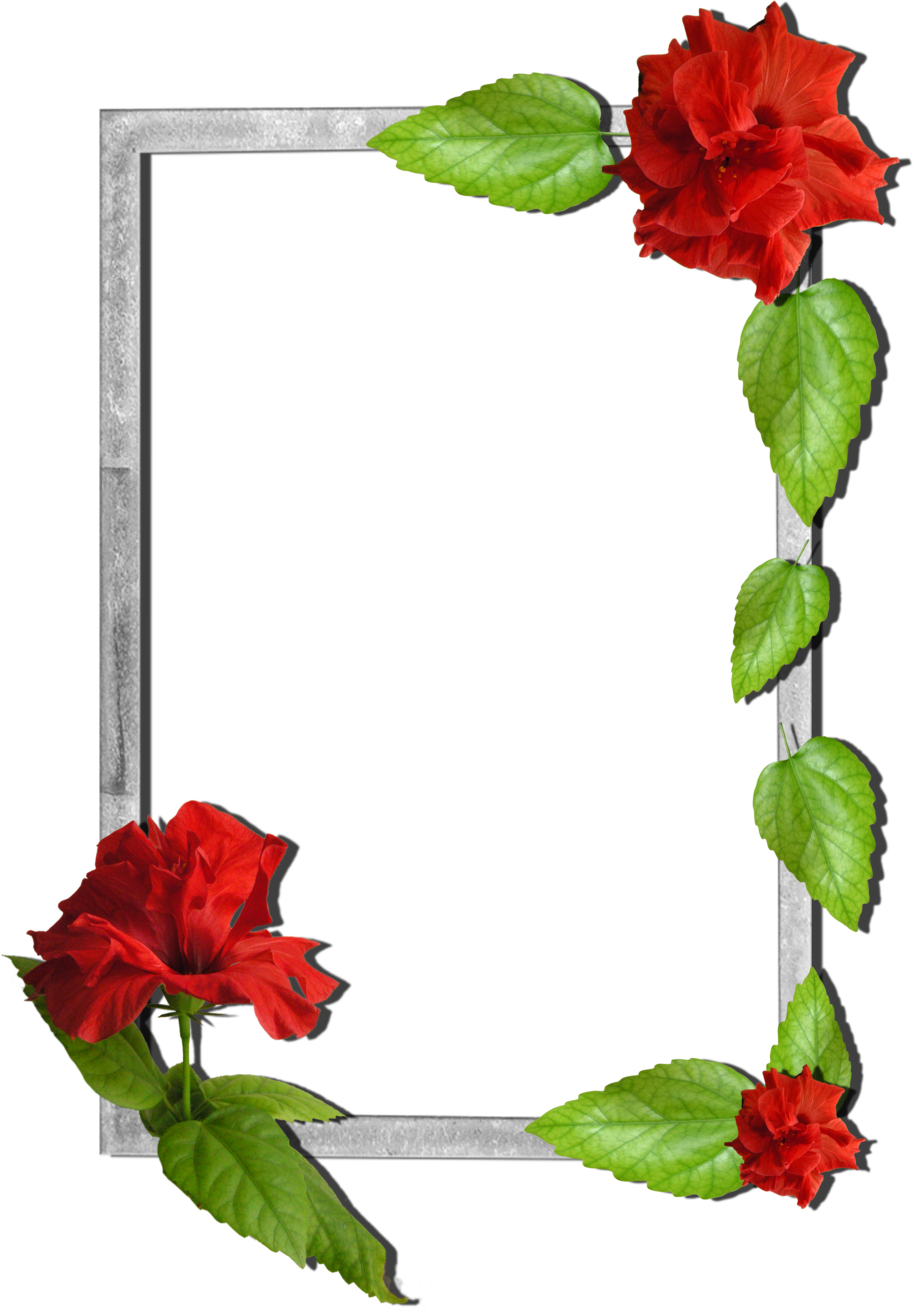 Transparent clip art borders flowers rose - Flower Love Photo Frames Free Download
