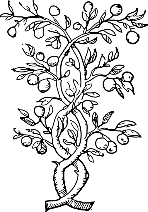 Transparent fruits clipart black and white - Olive Tree Png - Fruit Tree Black And White