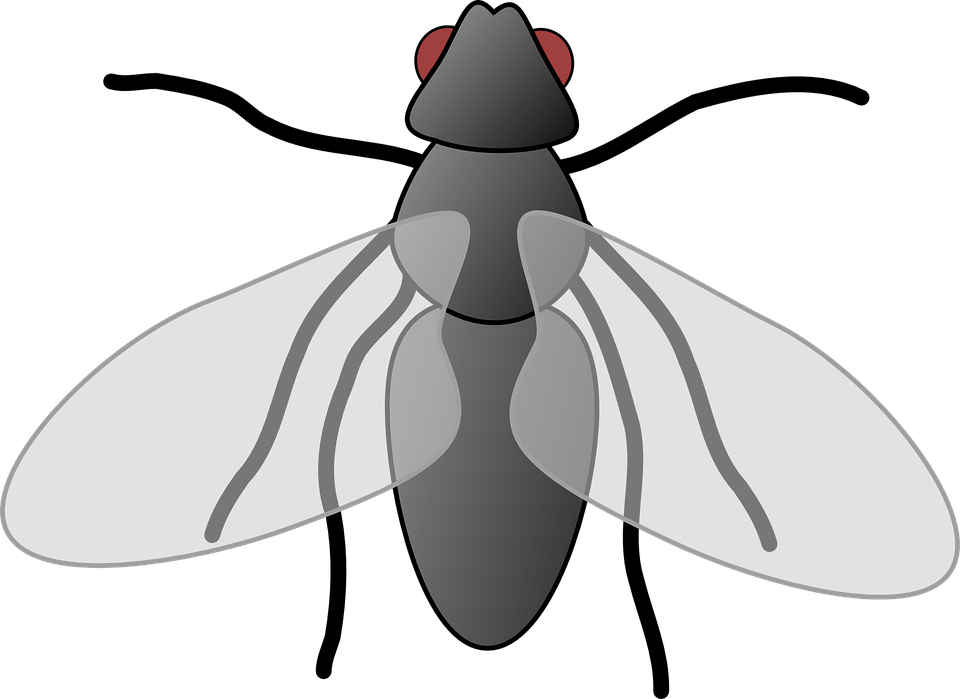 Transparent fly clipart - Fly Clipart Free - Clip Art Of Fly