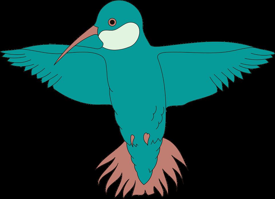 Wings bird. Hummingbird spread beak feathers