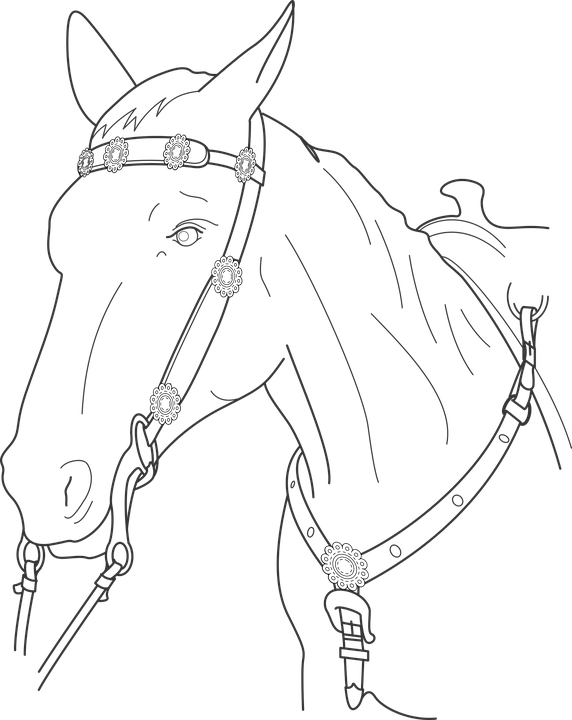 Transparent horse head silhouette clip art - War That Saved My Life Drawings