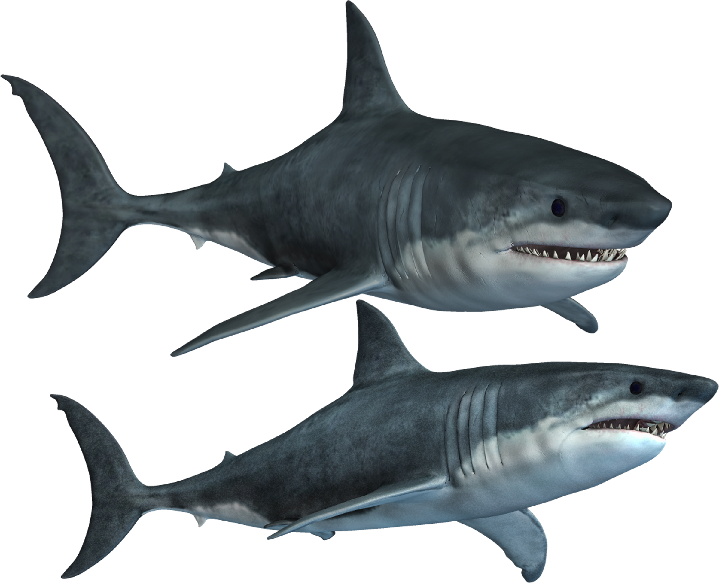 Great White Shark Clipart Invisible Background - Bull Shark