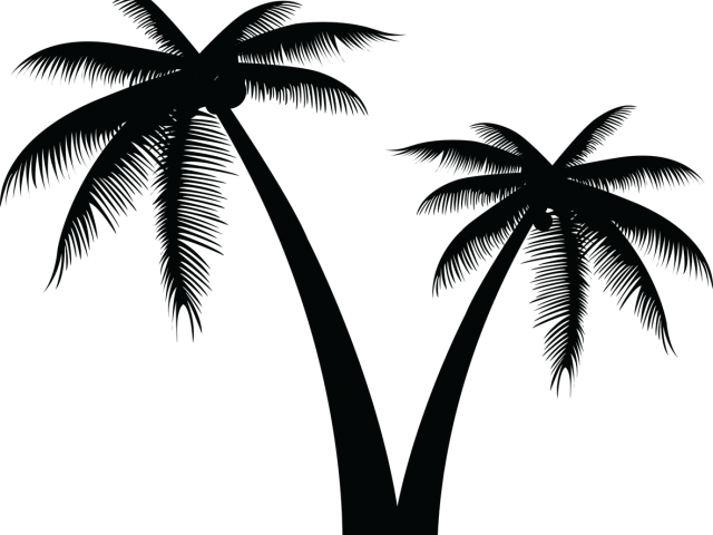 Transparent coconut tree clipart - Vector Clipart Coconut Tree - Palm Tree Silhouette Transparent Background