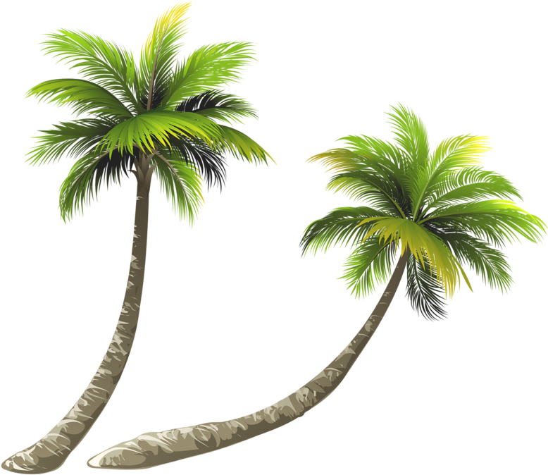 Transparent coconut tree clipart - Arecaceae Coconut Royalty-free Illustration - Coconut Tree Free Png