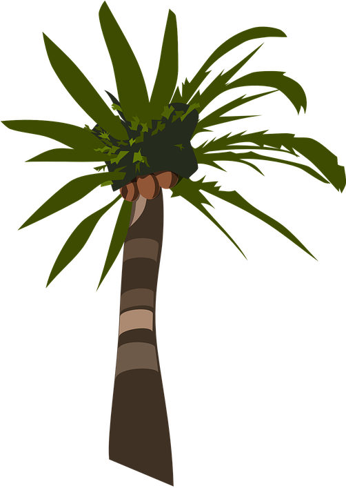 Transparent coconut tree clipart - Palm Tree Plant Tropical Coconuts - Palm Oil Tree Silhouette