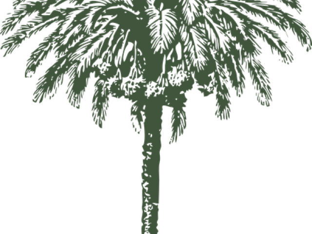Transparent clipart drawing of palm tree - Date Palm Clipart Arabian - Date Palm Black And White