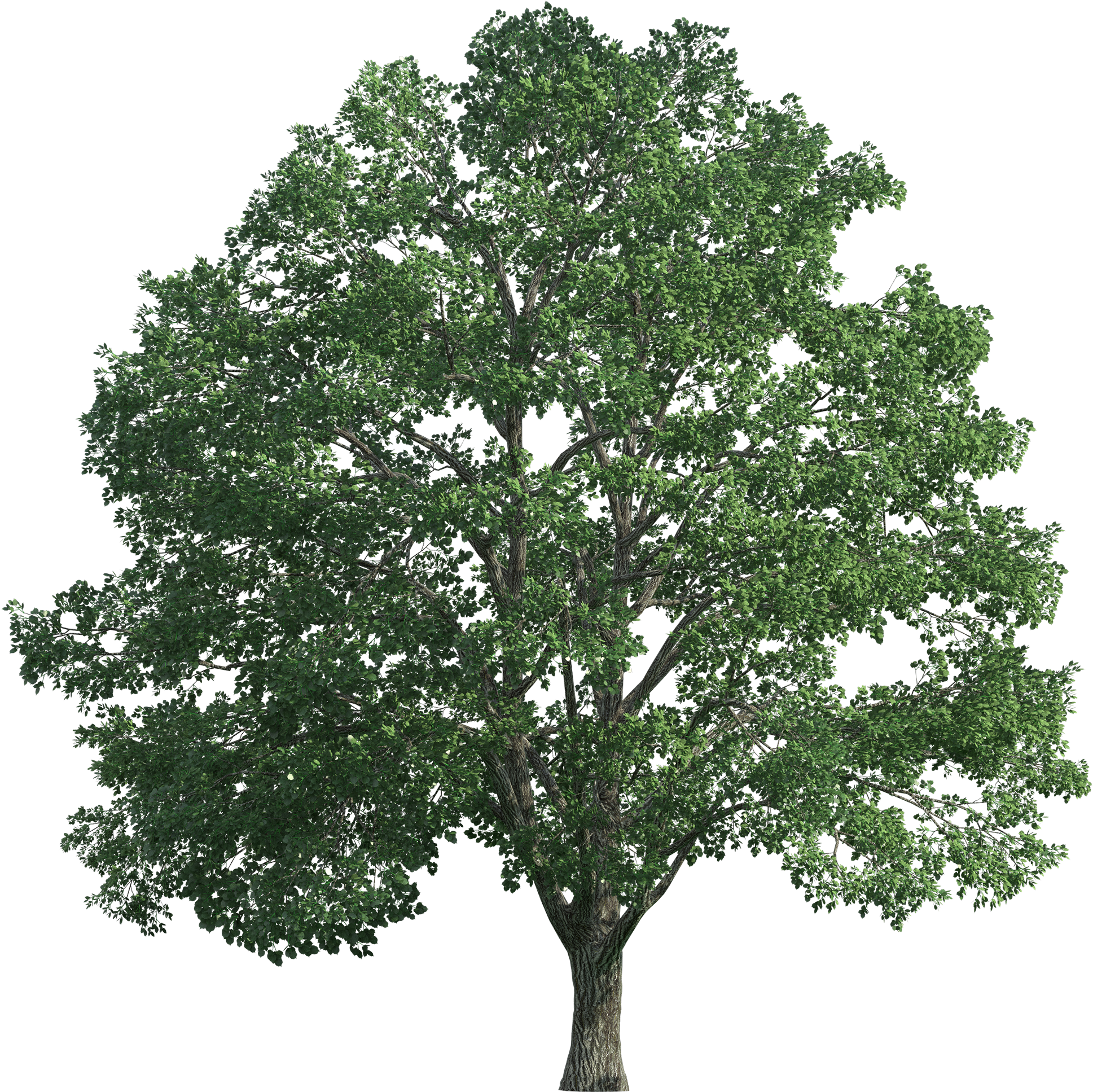 Tree Realistic Png Clip Art Transparent Background Png Big Tree Transparent Cartoon Jing Fm Find & download free graphic resources for trees cartoon. transparent background png big tree