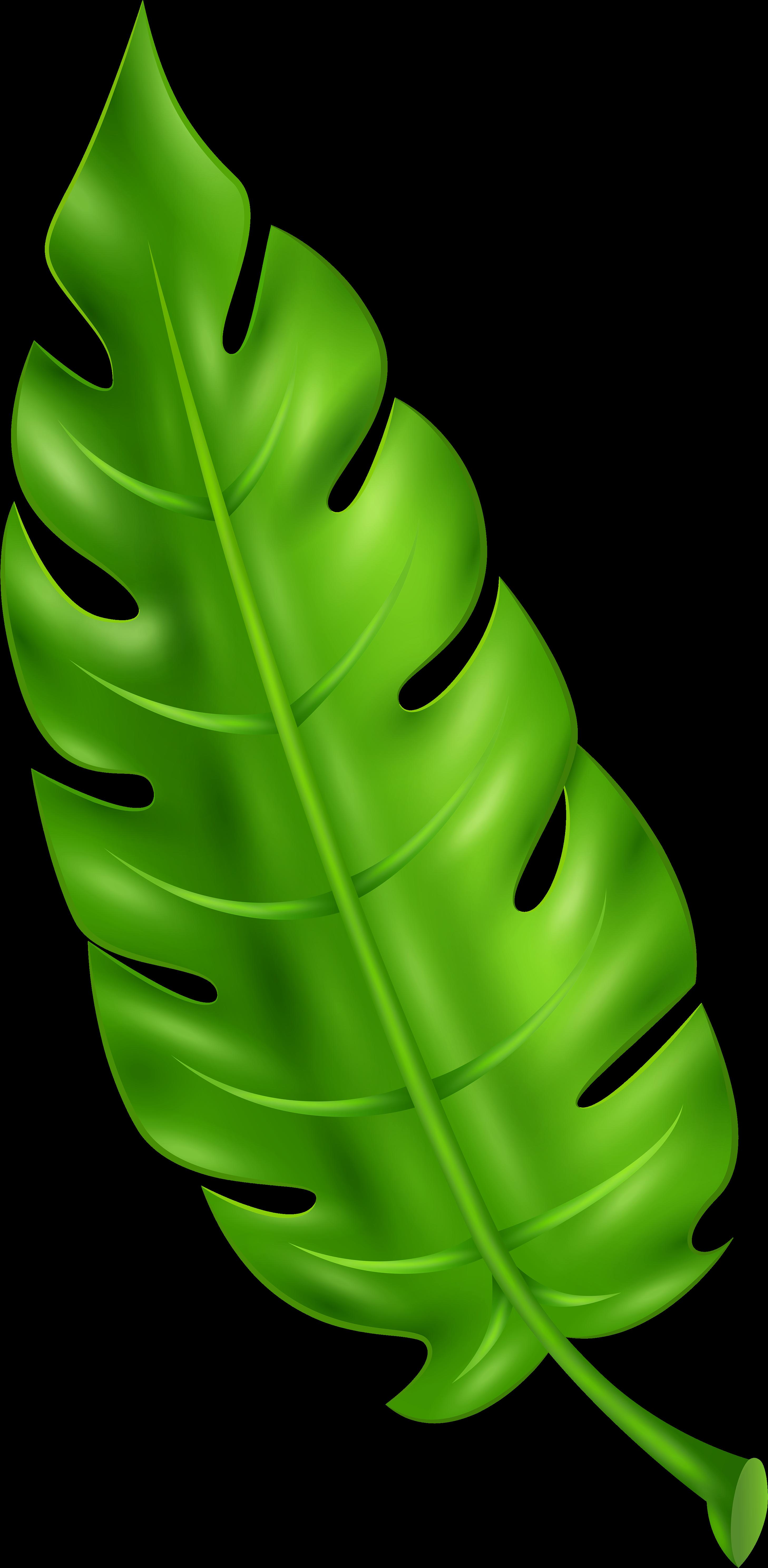 Green Leaf Clipart Leaf Clipart Png Transparent Cartoon Jing Fm