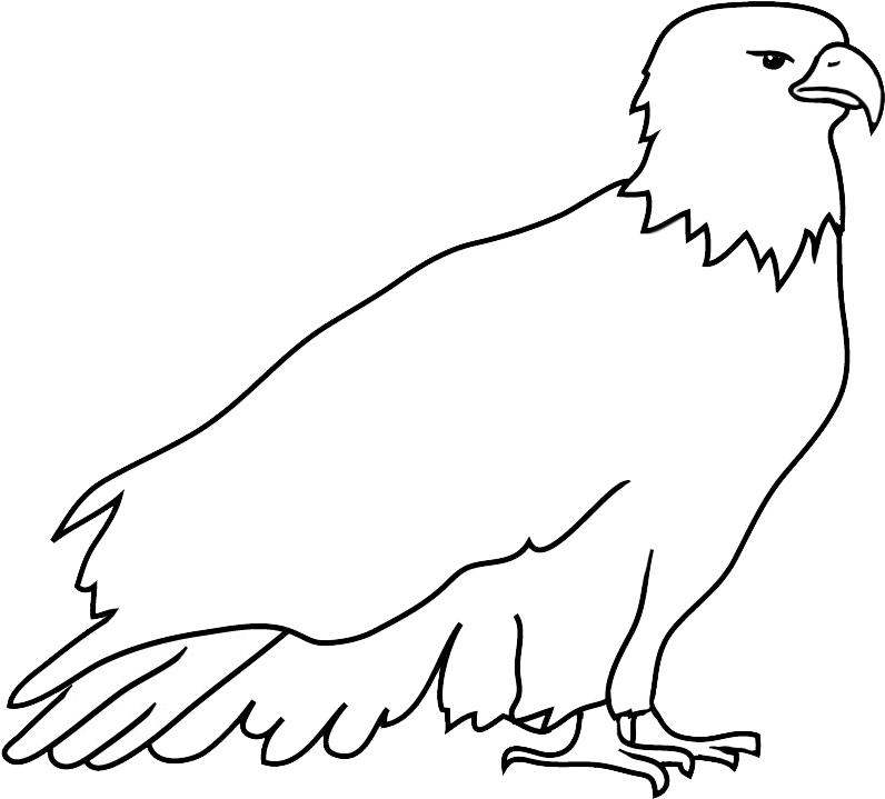 Transparent eagle head clipart black and white - Resting Bald Eagle Drawing - Outline Of An Eagle