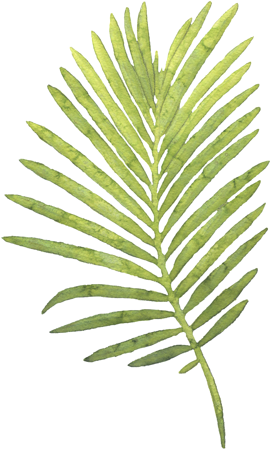 Watercolor Palm Leaves Png Watercolour Palm Leaf No Background Transparent Cartoon Jing Fm Search more hd transparent tropical leaves image on kindpng. watercolour palm leaf no background