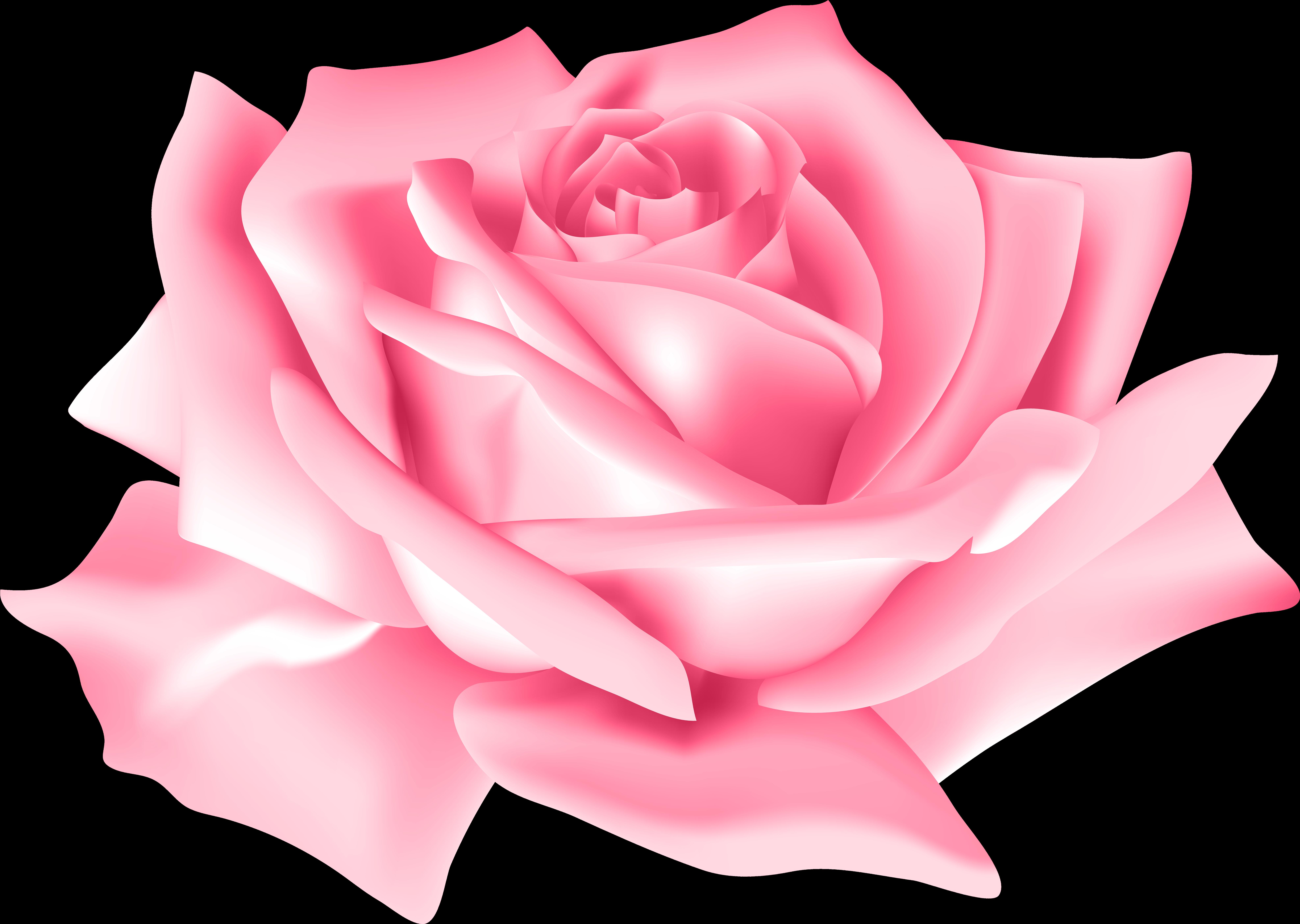 Pink Rose Flower Png Clip Art Image - Pink Rose Flower Png , Transparent Cartoon - Jing.fm