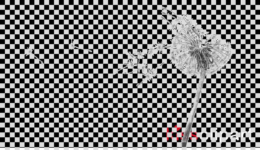 Drawing Sketch Illustration Transparent Png Image Dandelion Clipart Black And White Transparent Cartoon Jing Fm