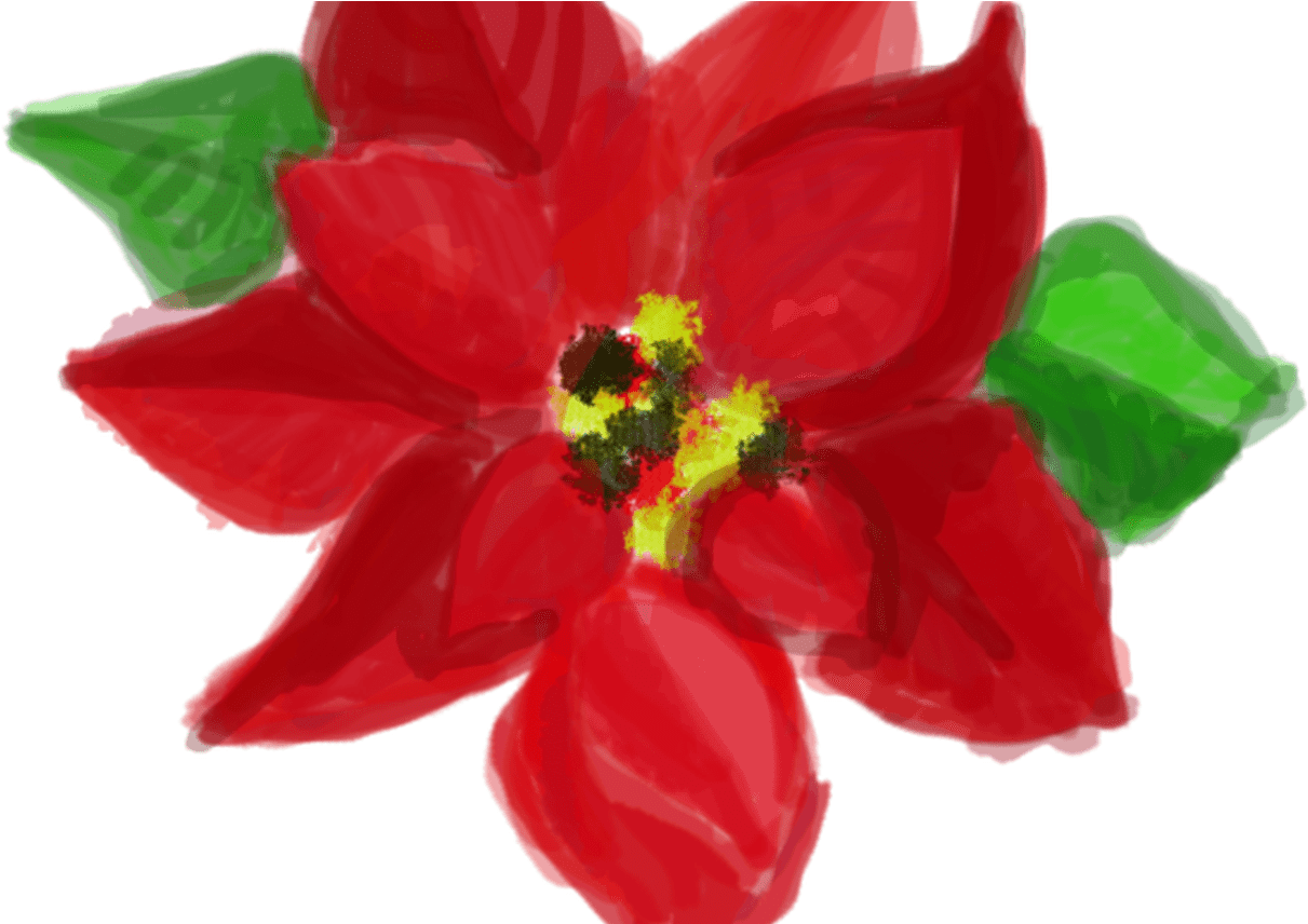Free Watercolor Christmas Clipart And Elements Poinsettia Transparent Cartoon Jing Fm