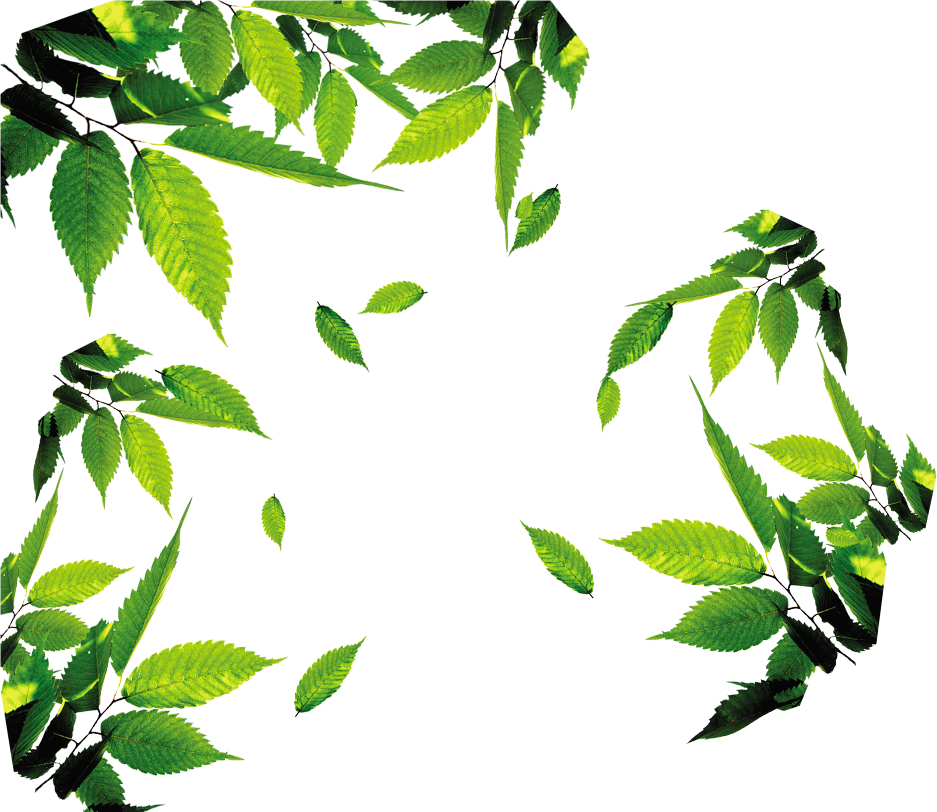 Leaves Leaf Icon Free Photo Png Green Tea Leaves Png Transparent Cartoon Jing Fm